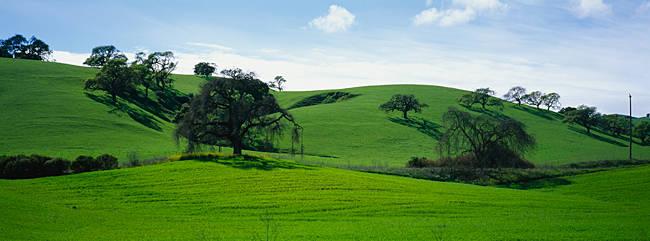 Trees in a landscape, California, USA
