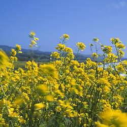 Close-up of flowers, California, USA