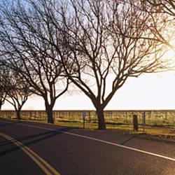 Trees along a highway, Napa Valley, California, USA