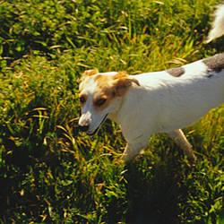 High angle view of a dog standing, Napa Valley, California, USA
