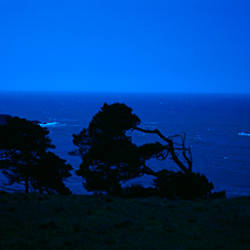 Silhouette of trees at dusk, California, USA