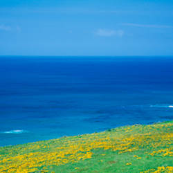 Panoramic view of the sea, California, USA