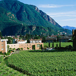 High angle view of a field, Bolzano, Italy