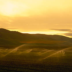 Water sprinklers irrigating a field, California, USA