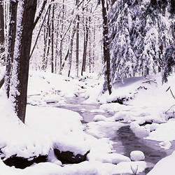 USA, New York State, Erie County, Emery Park, Stream flowing through snow covered forest