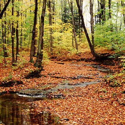 USA, New York State, Erie County, Emery Park, Stream of water flowing through forest