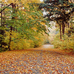USA, New York State, Erie County, Chestnut Ridge State Park, Dry leaves on the road