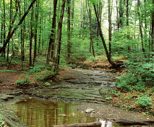 USA, New York State, Erie County, Emery Park, Stream of water flowing through the forest