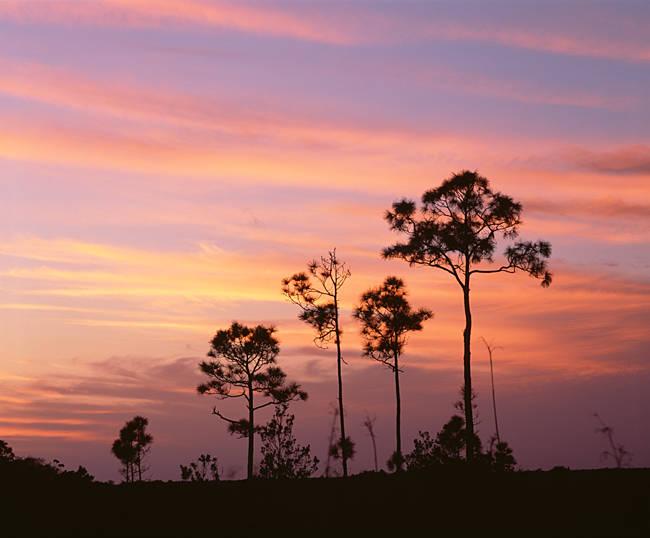 USA, Florida, Everglades National Park, Mahogany Hammock, Tree in the sunset