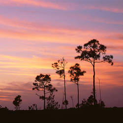 USA, Florida, Everglades National Park, Mahogany Hammock, Tree in the sunset