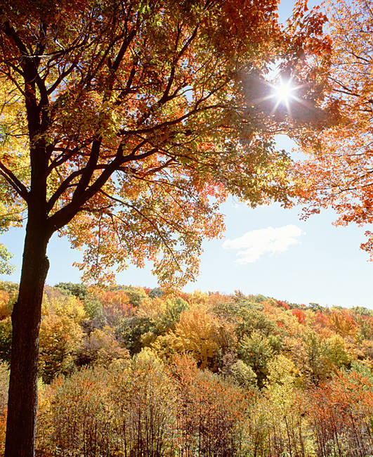 USA, New York State, Allegheny State Park, Autumn in the forest