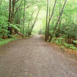 USA, New York, Finger Lakes region, Taughannock Falls State Park, Walking path running through a forest