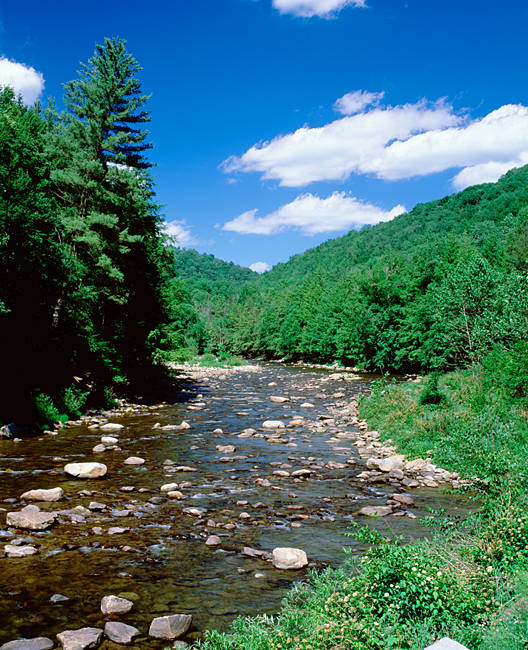 USA, Pennsylvania, World's End State Park, Rocks in Loyalsock Creek