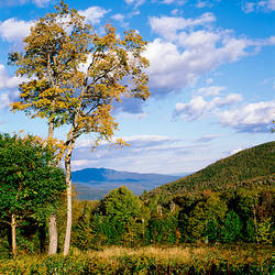 USA, New Hampshire, White Mountain National Forest, Kancamagus Pass, Trees in front of mountains