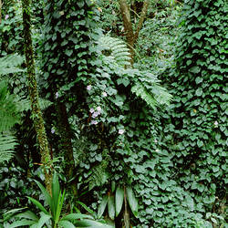 Dominica, Nature Sanctuary, Papillote Wilderness Retreat, Plants in the rainforest