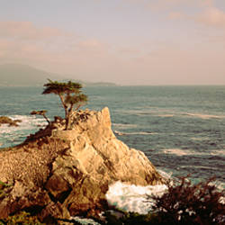 High angle view of a cliff along the sea, Seven Mile Beach, California, USA