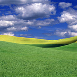 Clouds over a canola field, Palouse, Washington State, USA