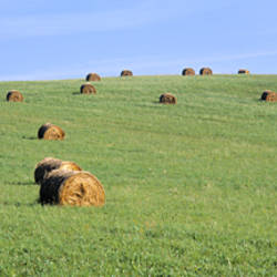 Hay bales in a field, Bohemia, Czech Republic