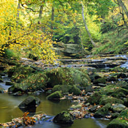 Stream Flowing Through Forest, Eller Beck, England, United Kingdom