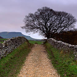 Stone Walls Along A Path, Yorkshire Dales, England, United Kingdom