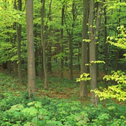 High Angle View Of Trees In A Forest, Scarborough, England, United Kingdom
