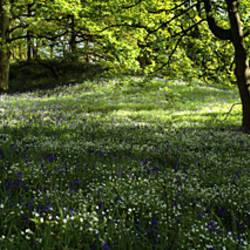 Flowers In A Forest, Newton Wood, Newton Ferrers, Devon, England, United Kingdom