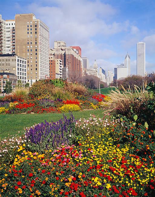 Flowers in a garden, Grant Park, Michigan Avenue, Chicago, Illinois, USA