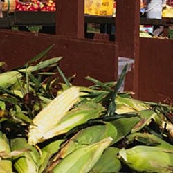 Corncobs in a market stall, Grand Rapids, Kent County, Michigan, USA