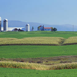 Fields Of Corn And Alfalfa On A Landscape, Vergennes, Vermont, USA