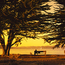 Trees In A Field, Crissy Field, San Francisco, California, USA