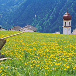 Wheelbarrow in a field, Austria