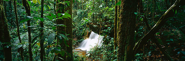 High angle view of waterfall in a forest, President Figueiredo Rain Forest, Amazon, Brazil