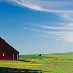 Barn in a wheat field, Washington State, USA