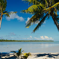 Palm trees on the beach, Mataiva, Tuamoto Islands, French Polynesia