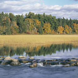 USA, Minnesota, Itasca State Park, View of trees around a lake