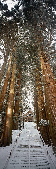Low angle view of trees, Nagano, Tokyo Prefecture, Japan