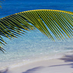 Palm tree on the beach, Salomon Beach, Virgin Islands National Park, St. John, US Virgin Islands