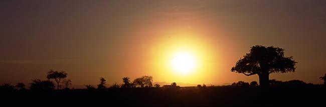 Sunset, Tarangire, Tanzania, Africa