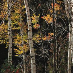 USA, New York, Adirondacks, autumn at Chapel Pond