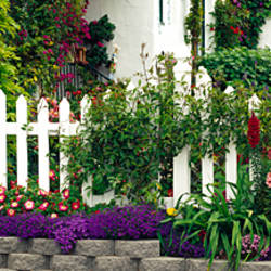 Flowers and picket fence in a garden, La Jolla, San Diego, California, USA