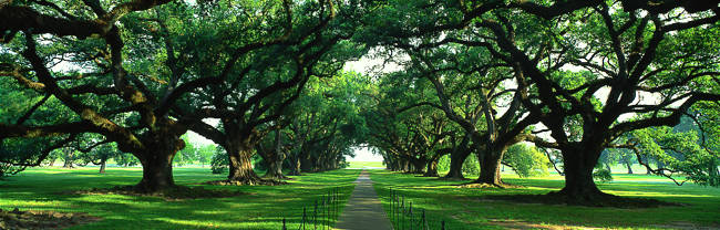 USA, Louisiana, New Orleans, brick path through alley of oak trees