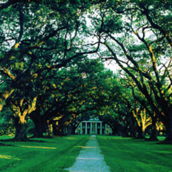 USA, Louisiana, New Orleans, Oak Alley Plantation, home through alley of oak trees, sunset