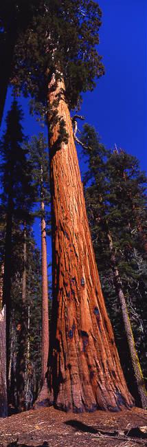 Sequoia National Park CA