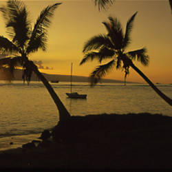 Silhouette of palm trees at dusk, Lahaina, Maui, Hawaii, USA