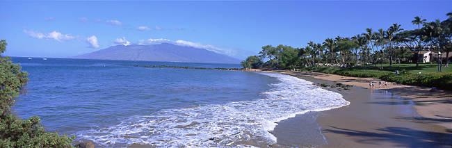 Trees on the beach, Molokai, Maui, Hawaii, USA