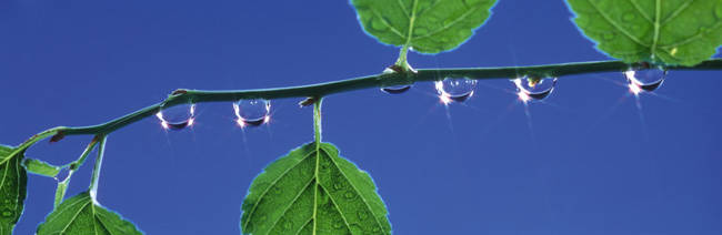 Leaves & dewdrops