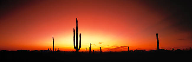 Sunset AZ USA
