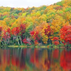 Savoy Mountain State Forest, Massachusetts, USA