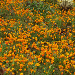 Sonoran Desert AZ USA