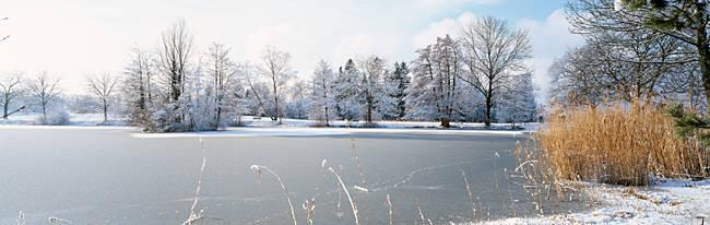 Snow covered trees near a lake, Lake Schubelweiher Kusnacht, Zurich, Switzerland
